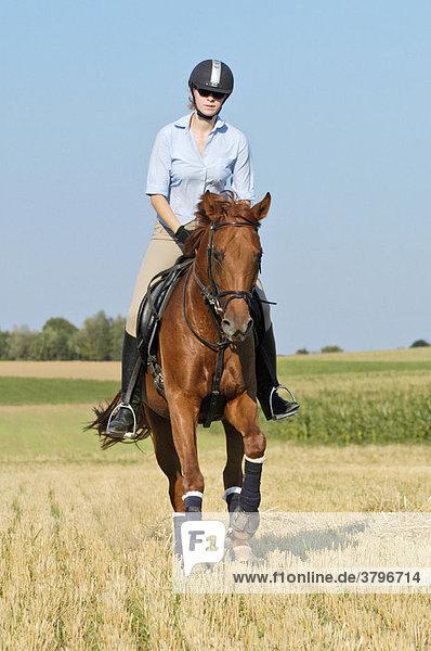 Junge Reiterin mit Reithelm galoppiert auf Westfalen-Stute über ein Stoppelfeld