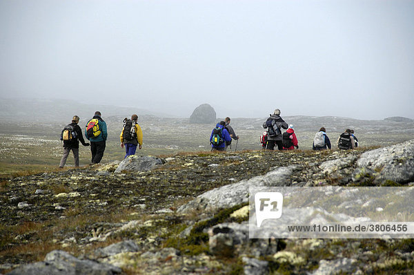 Hiking group hikes through swamp area into mist Eastgreenland
