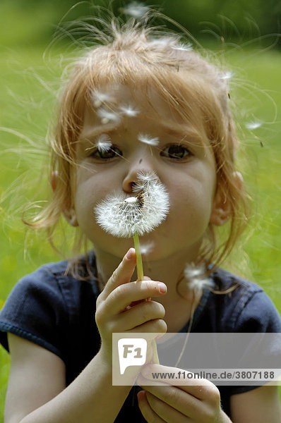 Child is blowing a dandelion