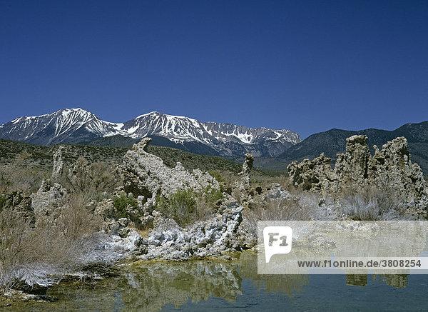 Bizarre Felsstrukturen und salzüberzogene Pflanzen  Mono See  Lee Vining  Kalifornien  USA