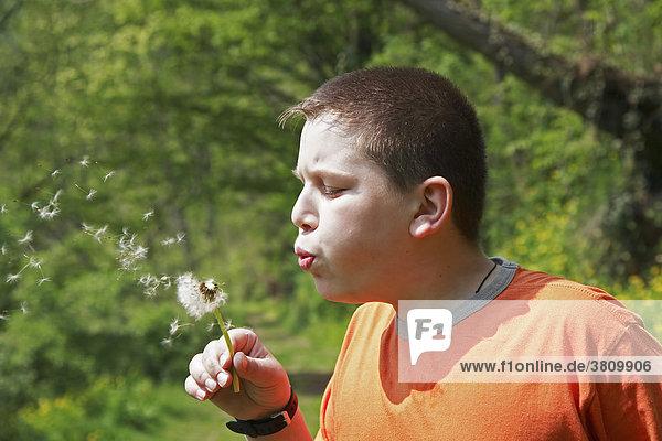 Zwölfjähriger Bub spielt mit einer Pusteblume  (Löwenzahn - Taraxacum officinale)