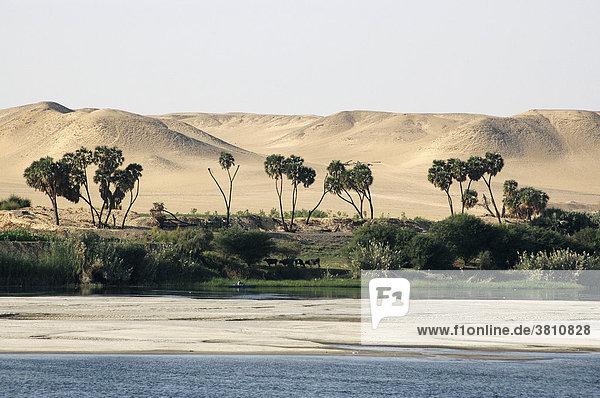 Uferlandschaft am Nil  Oberägypten  Ägypten  Afrika