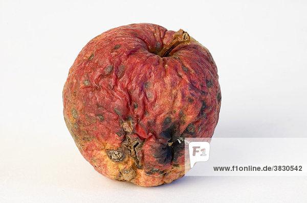 Apple aplples