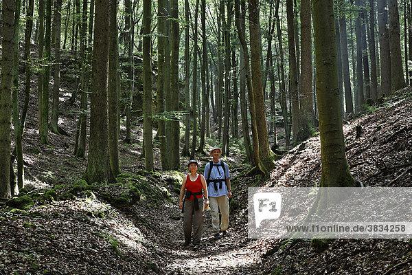 Wanderer auf Waldweg bei Mühlbach   Altmühltal   Oberpfalz   Bayern