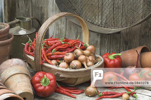 Gartenhäuschen mit geernteten Schalotten  Chilis  Tomaten und Paprikaschoten  England  Großbritannien  Europa