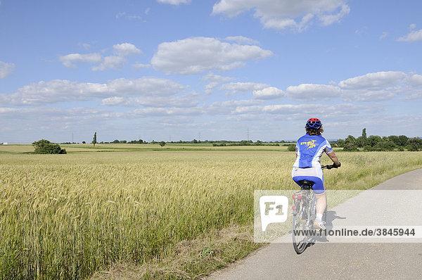 Radfahrerin auf Nebenstraße durch Getreidefeld  Triestingtal  Niederösterreich  Österreich  Europa