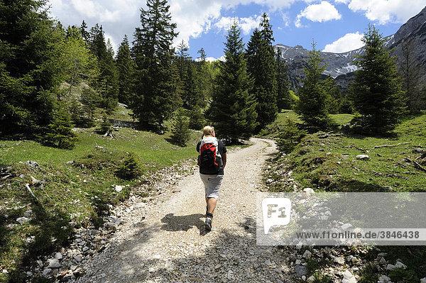 Junge Frau beim Wandern  Aufstieg zum Plumsjoch im Karwendelgebirge  Rissbachtal  Tirol  Österreich  Europa