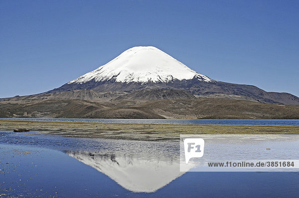 Parinacota  Vulkan  Spiegelung  Lago Chungara  See  Lauca Nationalpark  Altiplano  Norte Grande  Nordchile  Chile  Südamerika