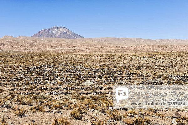 Vulkan Miscanti  Atacama Saline  Atacama Wüste  Chile  Südamerika