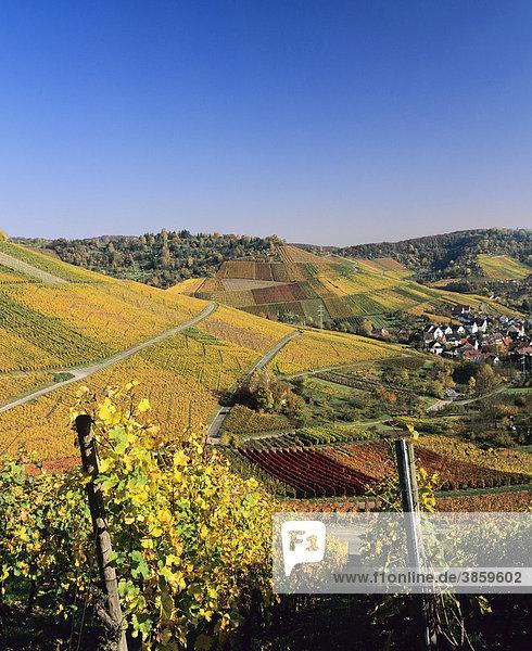 Weinberge im Herbst  Uhlbach  Baden-Württemberg  Deutschland  Europa