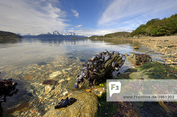 Stone overgrown with mssels  lake and mountain view  Ushuaia  Tierra del Fuego  Patagonia  Argentina  South America