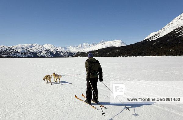 Mann beim Skijöring  Schlittenhunde ziehen Langläufer  Hundesport  Alaskan Huskies  gefrorener Lake Lindeman  Berge dahinter  Küstengebirge  Chilkoot Pass  Chilkoot Trail  Yukon Territory  British Columbia  Kanada