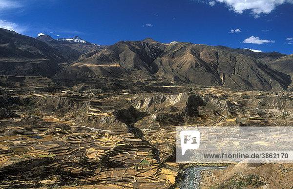 Terrassenfelder im Colca-Canon in 3450 m Höhe  Peru  Südamerika