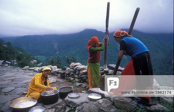 Junge Mädchen zerstampfen mit Mörsern Getreide in einem Korb  anschließend wird das Mehl gesiebt  Volksgruppe der Bhotia  Dodi-Tal  Garhwal Himalaya  Uttarakhand  Nordindien  Asien