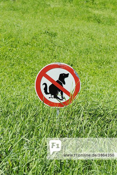 Ausscheidung Außen Bei Canidae Dung Fäzes Für Hundekacke