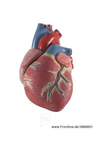 anatomisch, des, freigestellt, Herz, Herzens, Innen, Körperteil ...