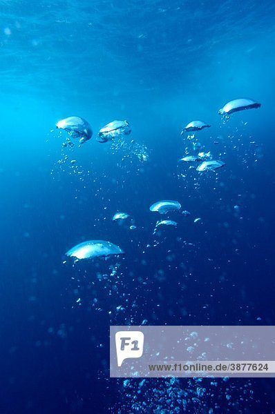 Bubbles rising to surface in sea  underwater view