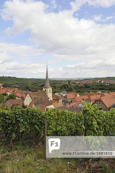 Escherndorf am Main  Mainschleife  Unterfranken  Bayern  Deutschland  Europa
