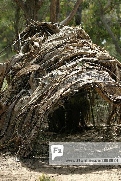 Aboriginal hut made from tree bark  Southwestern Australia  Australia