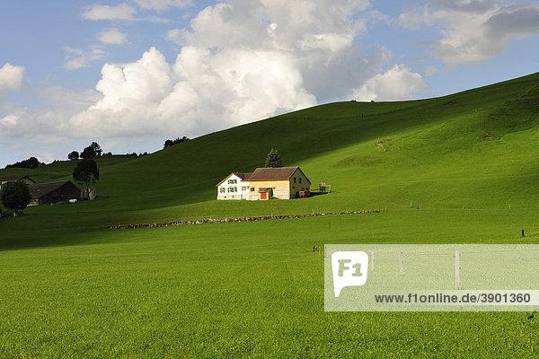 Bauernhaus inmitten grüner Kuhweiden  Kanton Appenzell  Schweiz  Europa