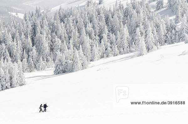 Winter forest with snow-shoe hikers