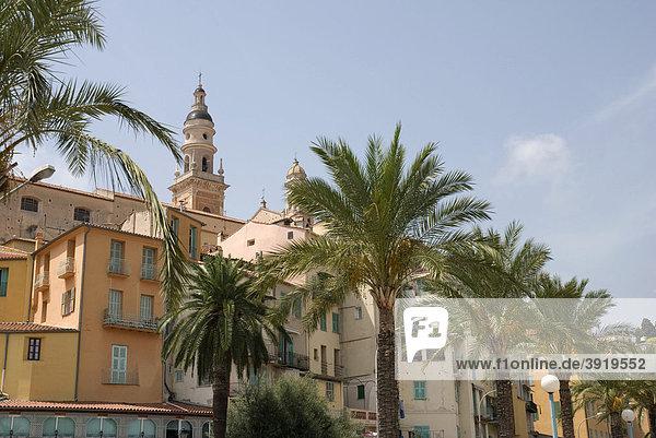 Palmen vor der Altstadt  Menton  Cote d'Azur  Provence-Alpes  Frankreich  Europa
