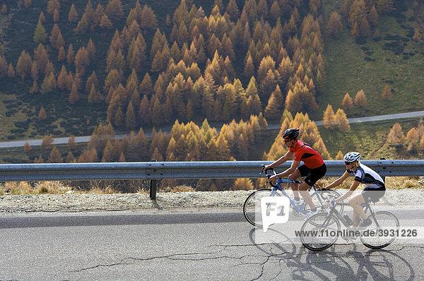 Rennrad-Fahrerin und Fahrer auf Penserjochstraße  herbstlich gefärbte Lärchen  Südtirol  Italien  Europa