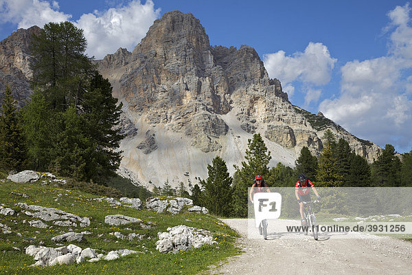 Mountain bike riders riding on the road to Fanes hut  Trentino  Alto Adige  Italy  Europe