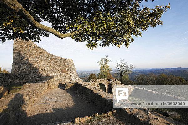 Die Löwenburg  Mauerreste  Siebengebirge  Nordrhein-Westfalen  Deutschland  Europa