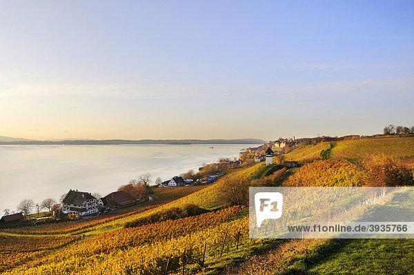 Blick über die Rebhänge des Meersburger Weingutes zur Altstadt im herbstlichen Abendlicht  Bodenseekreis  Baden-Württemberg  Deutschland  Europa