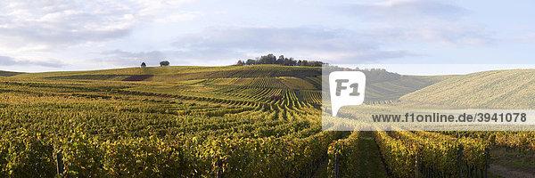 Weinhänge in Hattenheim bei Eltville  Rheingau  Hessen  Deutschland  Europa Weinhänge in Hattenheim bei Eltville, Rheingau, Hessen, Deutschland, Europa