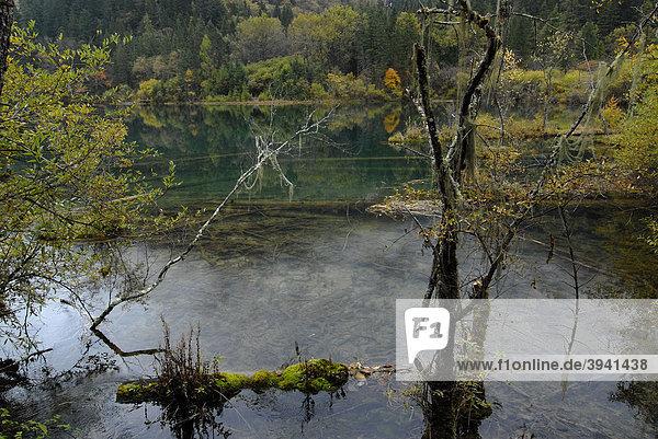 Autumn mood at the Panda waterfalls  Jiuzhaiguo Valley  Jiuzhaiguo National Park  Sichuan  China  Asiaan  China  Asia