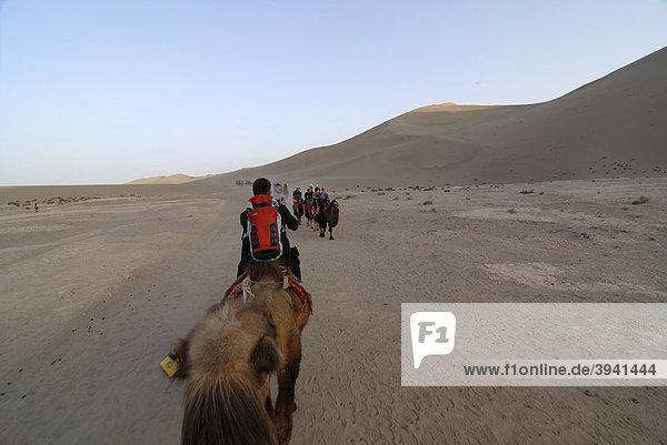 Kamelkarawane mit Touristen vor den Sanddünen der Wüste Gobi und des Mount Mingshan bei Dunhuang  Seidenstraße  Gansu  China  Asien