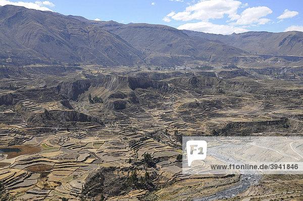 Terrassenfelder  Nähe Maca  Colca Canyon  Peru  Südamerika  Lateinamerika