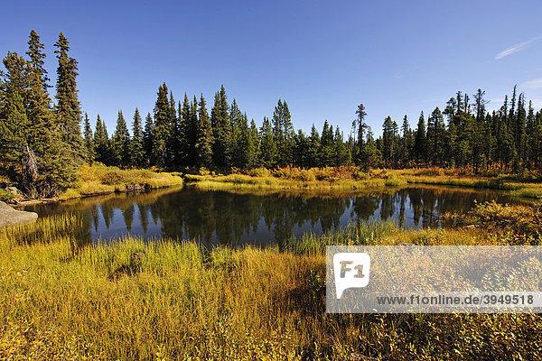 Im Chilcotin Country zwischen Williams Lake und dem Küstengebirge auf dem Weg nach Bella Coola  Kanada