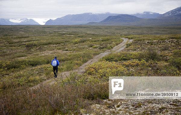 Eine Frau wandert durch die alpine Tundra auf dem Maclaren Summit Pfad  ein Pfad für Geländefahrzeuge in der Nähe des Denali Highway in der abgelegenen Wildnis östlich vom Denali National Park  Alaska  USA