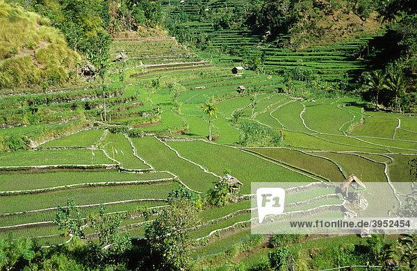 Reisfeld bei Amlapura  Bali  Indonesien