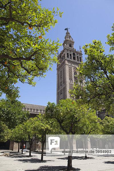 La Giralda  Turm der Kathedrale von Sevilla  Andalusien  Spanien  Europa