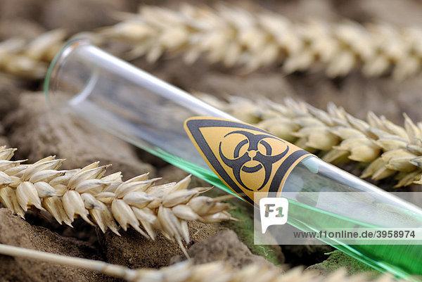 Reagenzglas mit Biogefährdung-Symbol und Weizenähren  Gen-Weizen
