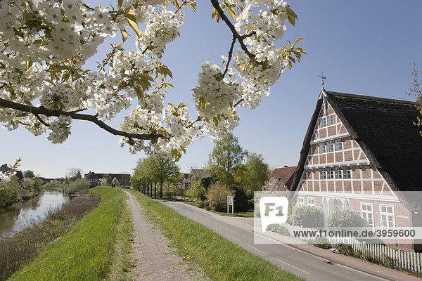 Charakteristisches Altländer Bauernhaus  Kirschblüte  Altes Land  Niederelbe  Niedersachsen  Norddeutschland  Deutschland  Europa