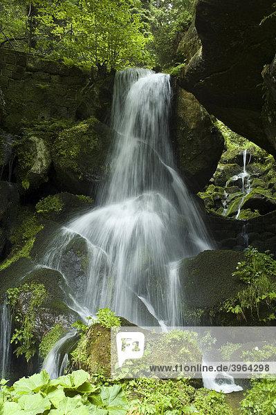Kirnitzschtal  Lichtenhainer Wasserfall  Sächsische Schweiz  Elbsandsteingebirge  Sachsen  Deutschland