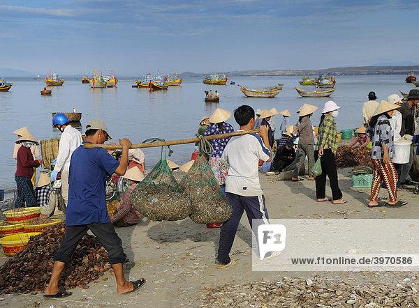 Fischer tragen Körbe mit Fisch  Frauen am Fischmarkt  Strand von Mui Ne  Vietnam  Asien