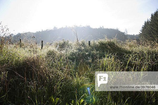 Waldwiese mit Morgentau