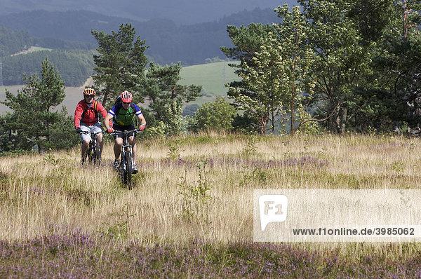 Mountainbike-Fahrer in Heidelandschaft am Kahlen Pön bei Usseln  Hessen  Deutschland
