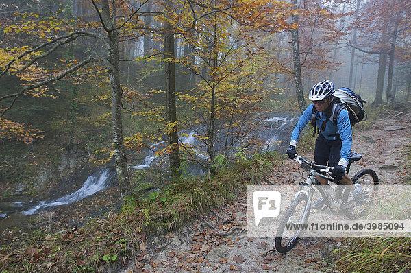 Mountainbike-Fahrerin im Herbst-Wald am Fluderbach bei Ried im Winkel  Chiemgauer Alpen  Bayern  Deutschland