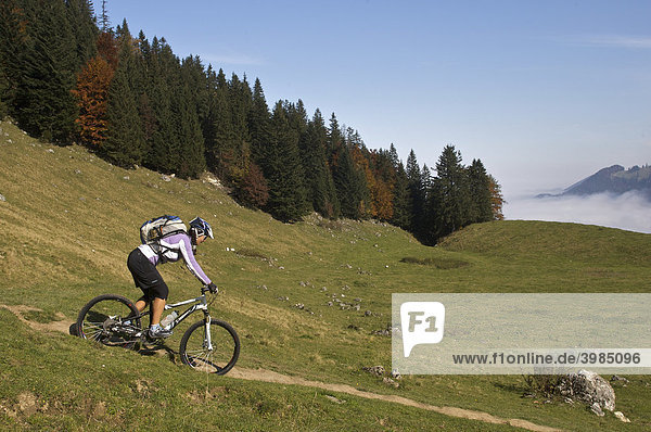 Mountain bike rider  female  in autumn on Heuberg Mountain near Nussdorf am Inn  Bavaria  Germany