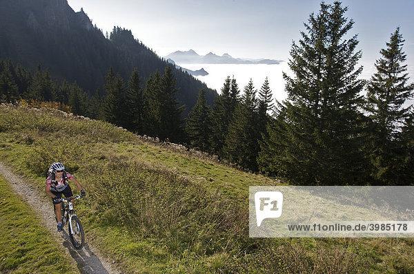 Mountainbike-Fahrerin im Herbst an der Hochries  Chiemgauer Alpen  Bayern  Deutschland