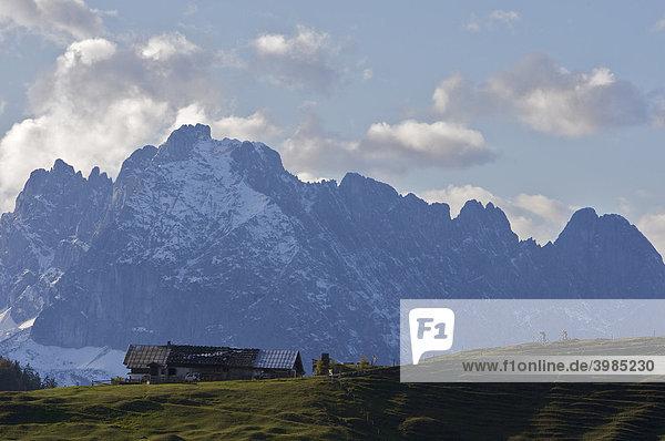 Mountainbike-Fahrer  Bruggwirtsalm bei Kirchdorf  dahinter Wilder Kaiser  Tirol  Österreich