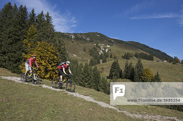Mountain biker at Mount Gaisberg  Rettenbach  Tyrol  Austria