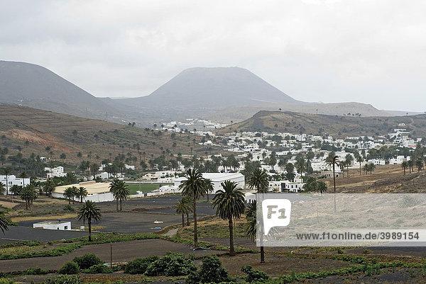 Haria  Tal der 1000 Palmen  Lanzarote  Kanarische Inseln  Spanien  Europa